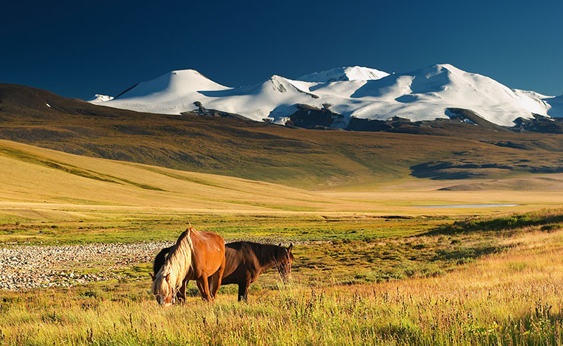 mongolie steppes chevaux